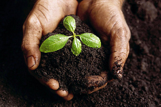 TSU students will conduct campaign dedicated to World Soil Day